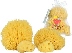 Natural Sea Sponges for Babies - 4 Pack Bath Care Set, Gentl